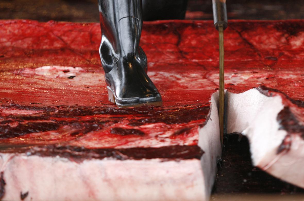 Zpracování ulovených velryb
