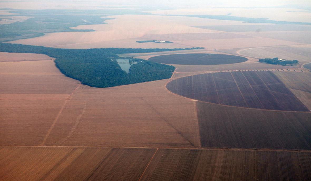 Sójové plantáže v brazilském státě Mato Grosso