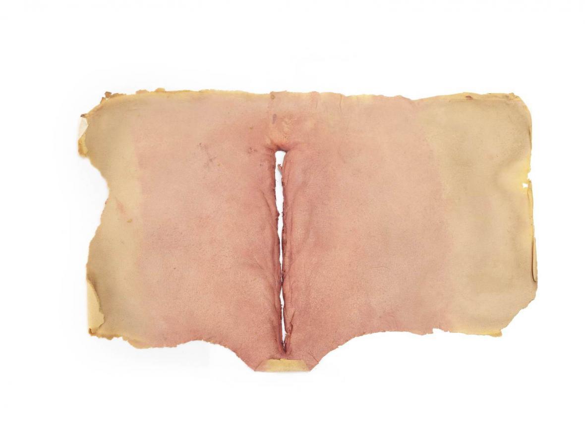 Kus kůže z filmu Videodrome