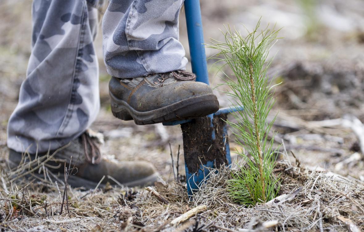 Některé firmy zneužívaly důvěry zahraničních lesních dělníků