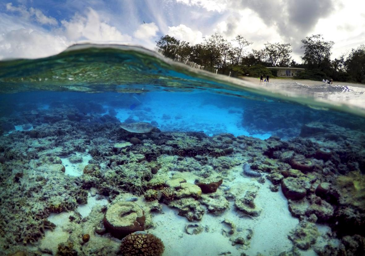 Koráli u ostrova poblíž australského Queenslandu
