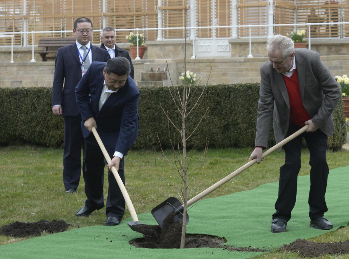 Čínský a český prezident v Lánech společně zasadili pamětní strom