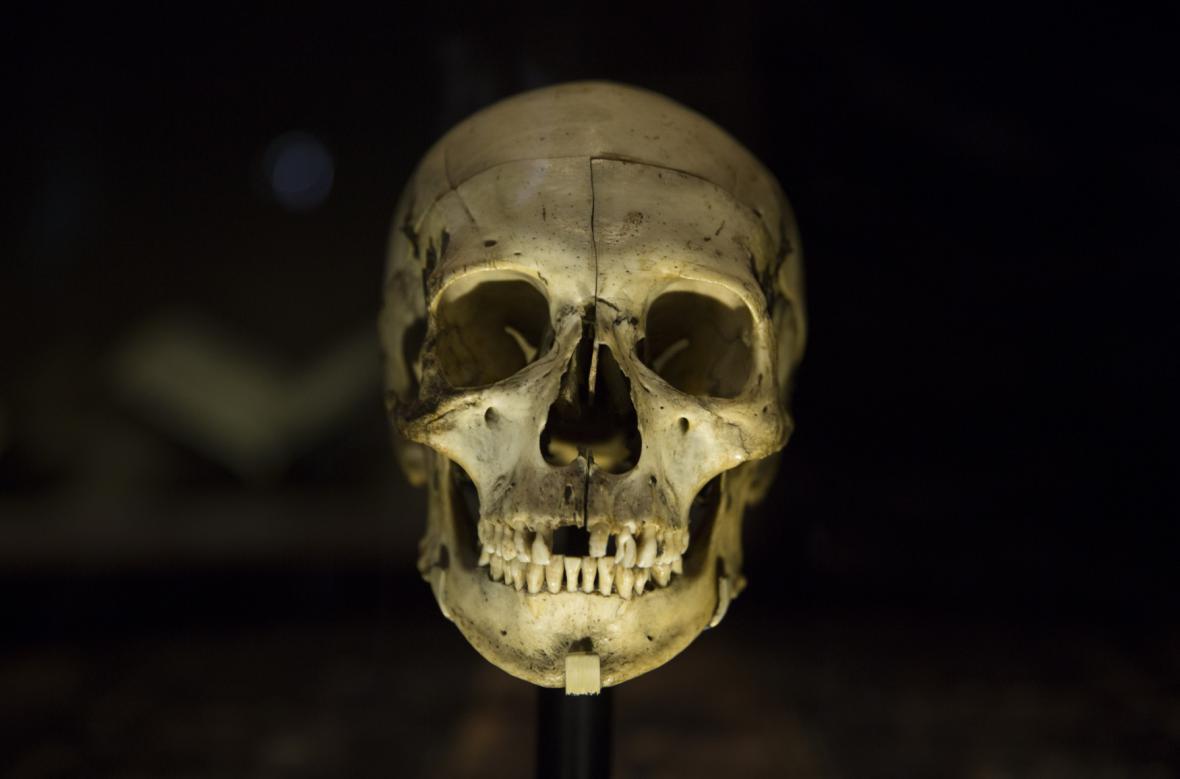 Lebka ze hry Hamlet