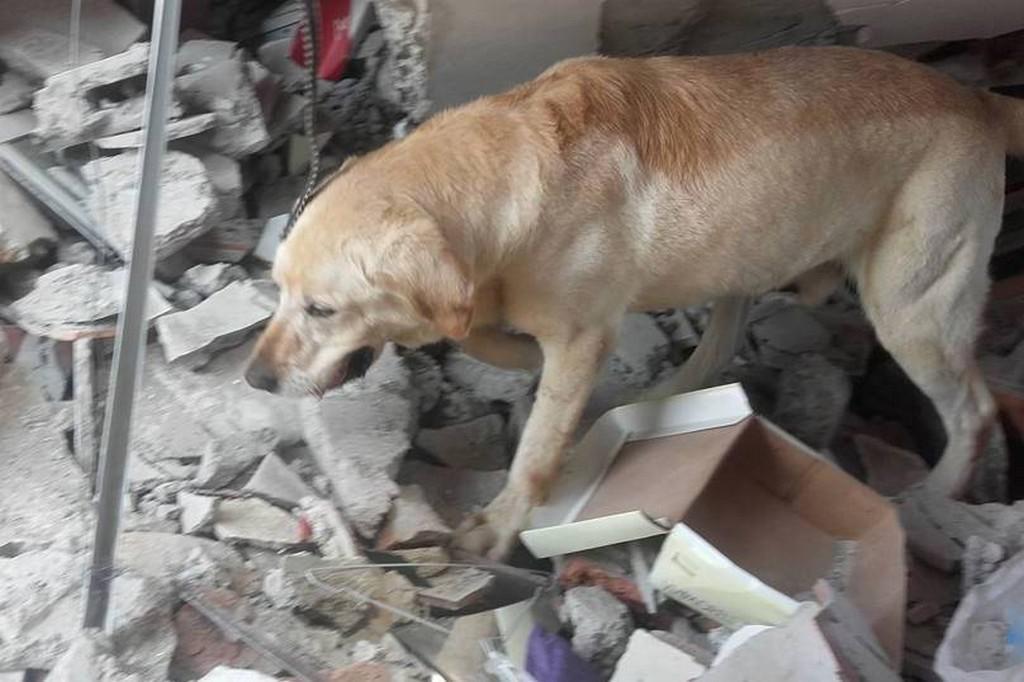 Dayko při pátrání po přeživších v troskách budov
