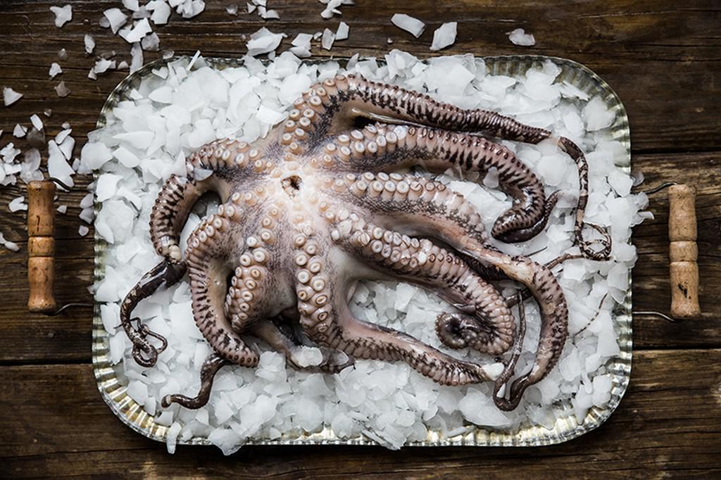 Chobotnice na ledu Petry Novotné