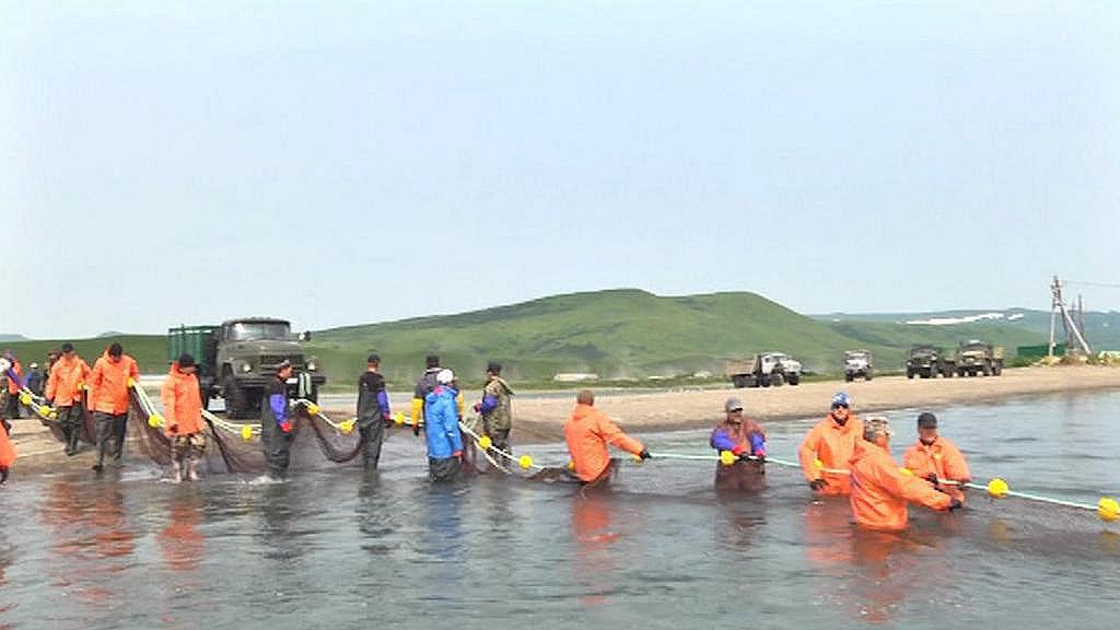 Výlov lososů na Kamčatce