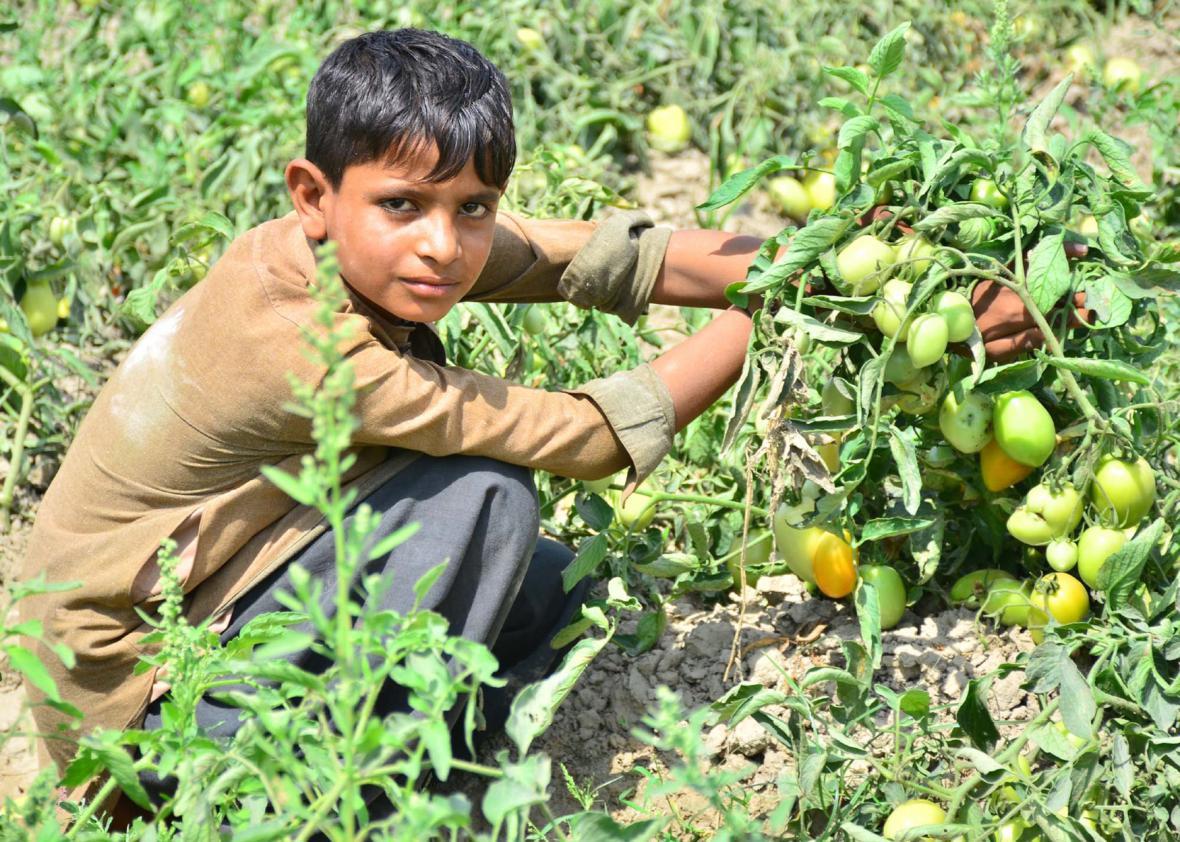 Nejvíc dětí pracuje v zemědělství