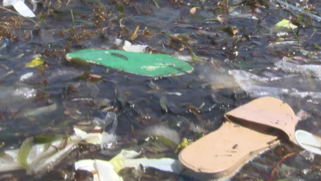 Žabky vyplavené na pláž v Africe
