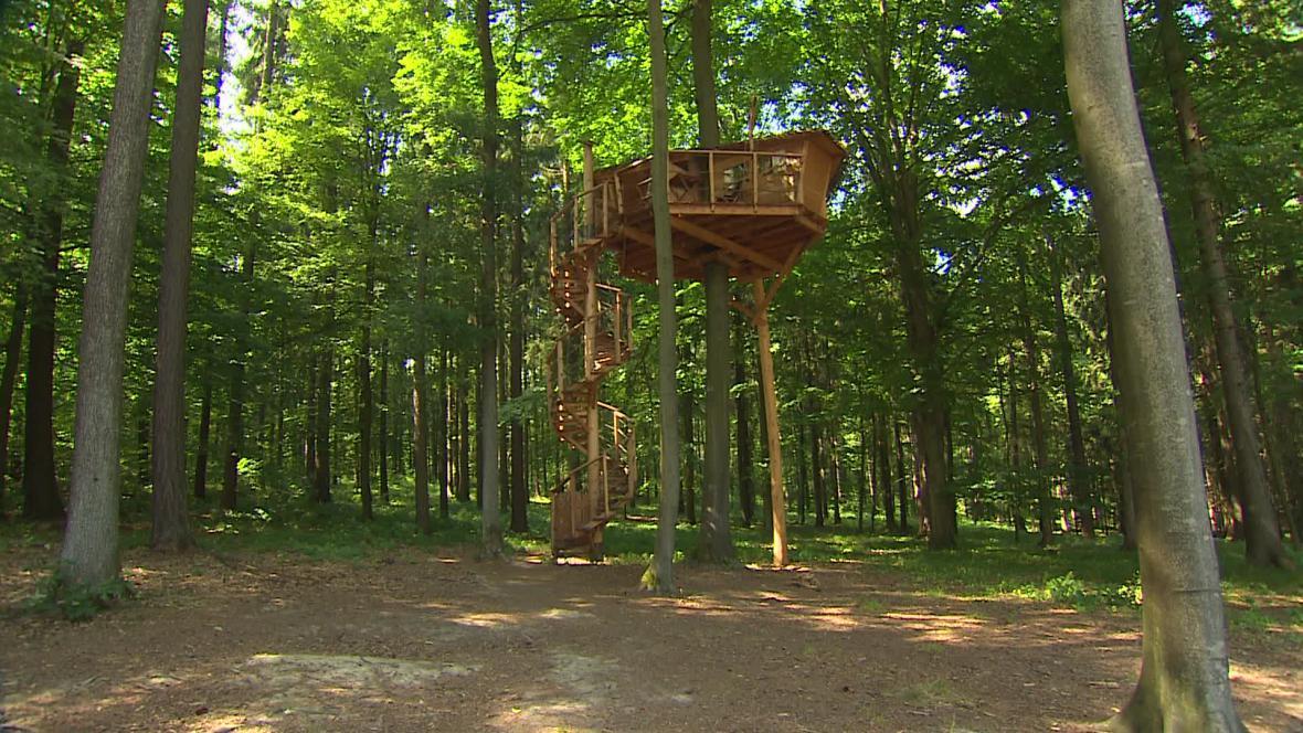 Obyvatelé domku v korunách stromů žijí sedm metrů nad zemí