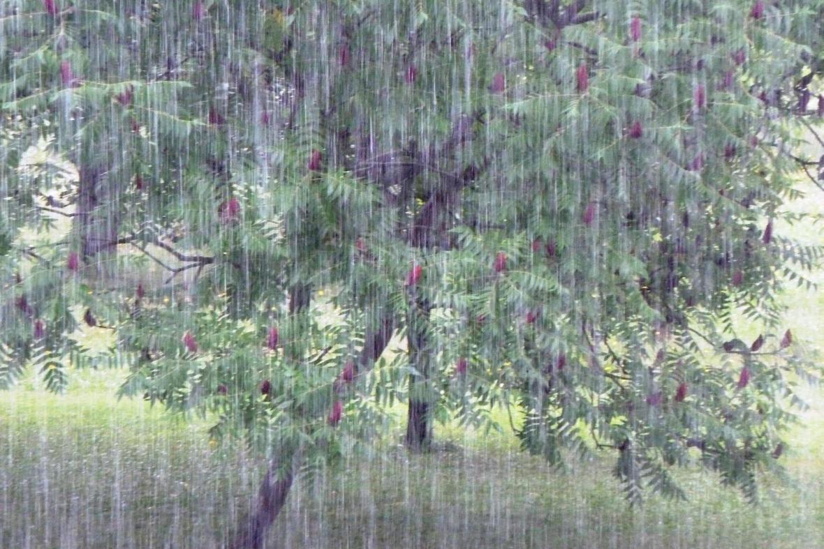 Déšť v Česku