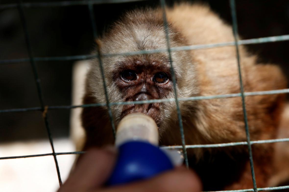 Krmení zvířat ve venezuelské zoo