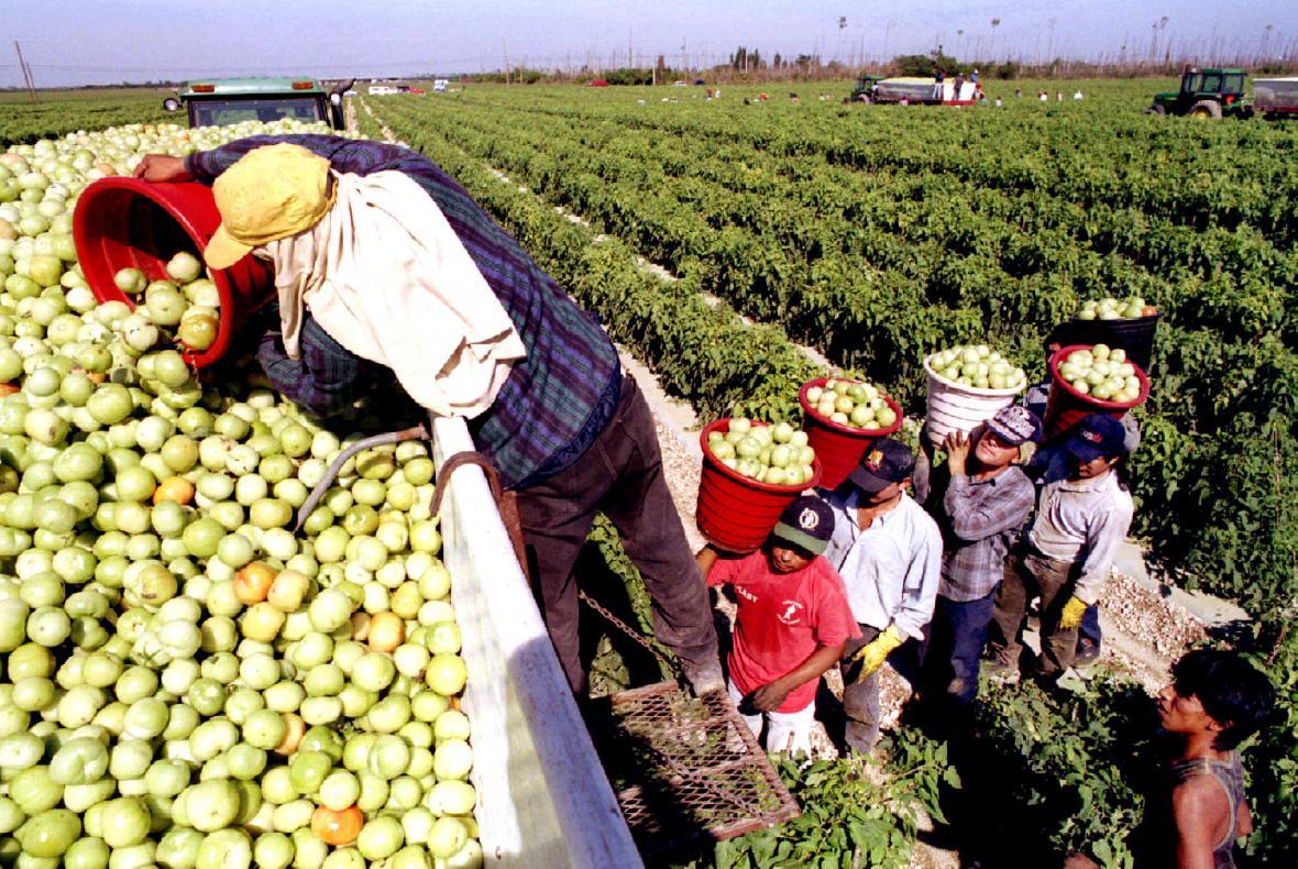 Imigranti na farmě na Floridě