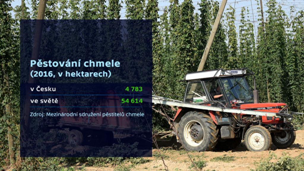 Pěstování chmele v ČR a ve světě