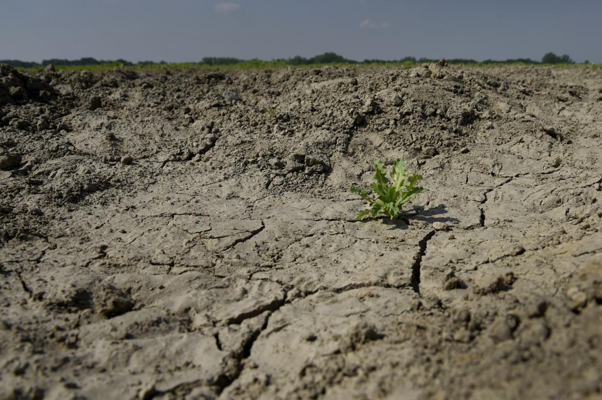 Suchá půda v Dětmarovicích