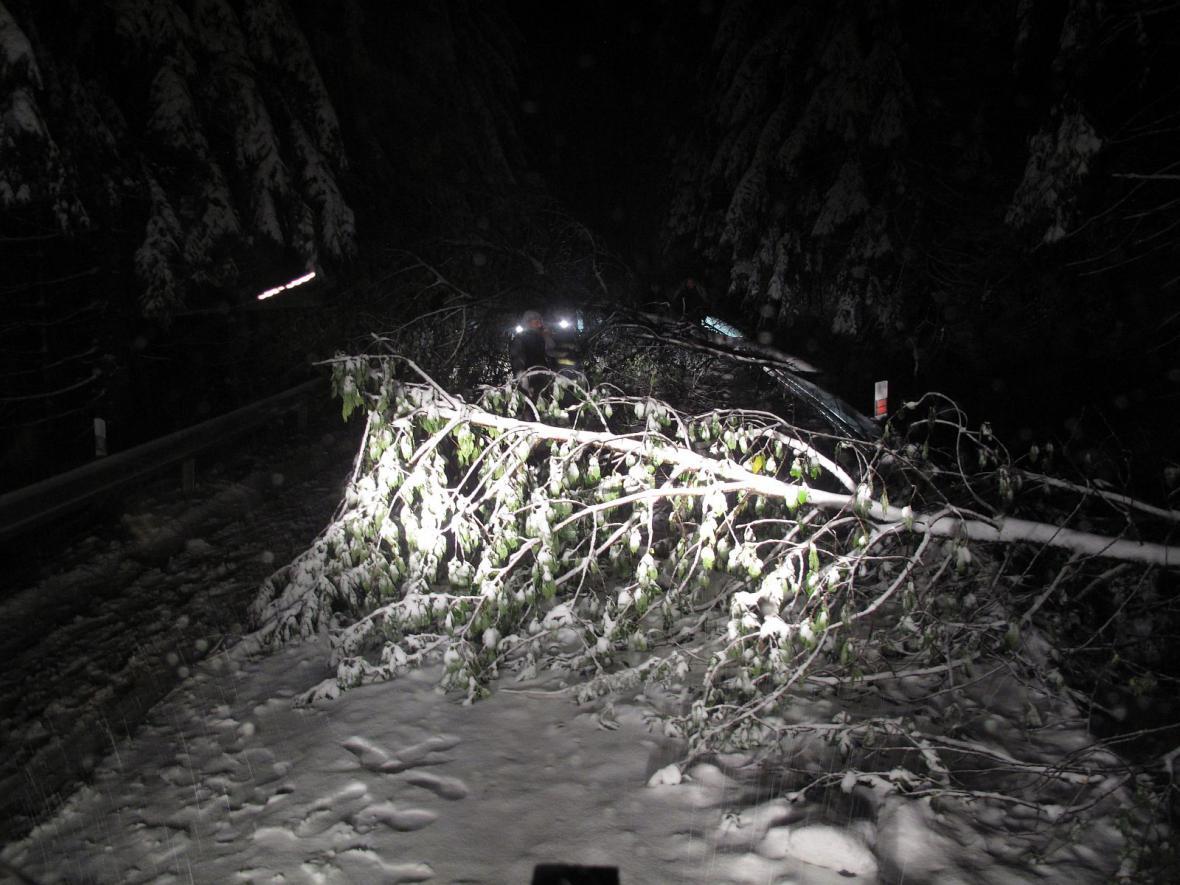 Strom na silnici na Pustevny