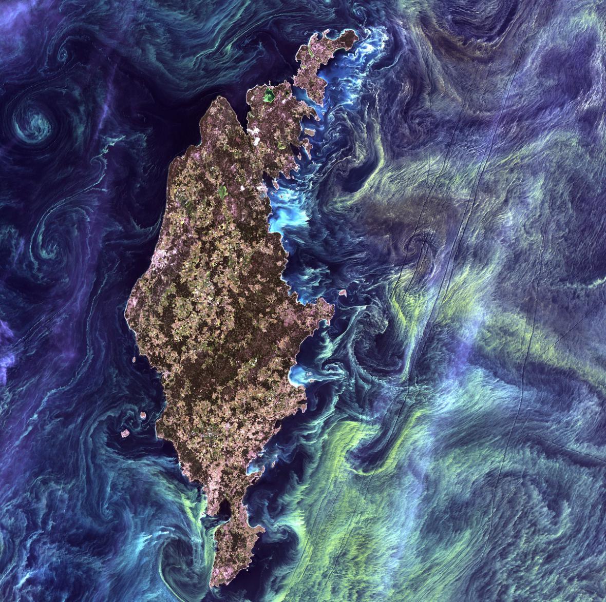 Vodní květ na satelitních snímcích