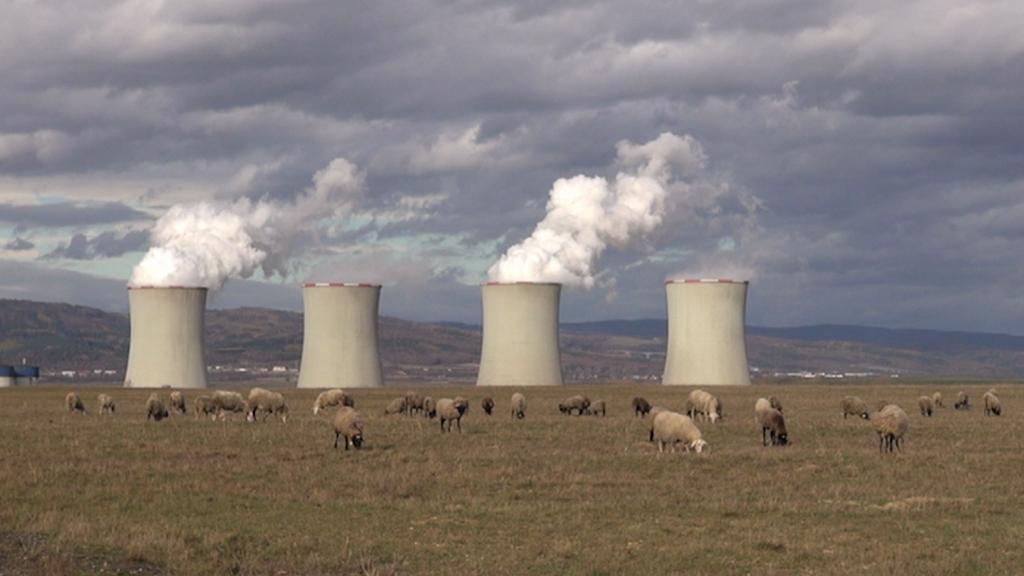 Ovce u elektrárny Tušimice zachraňují vzácné motýly