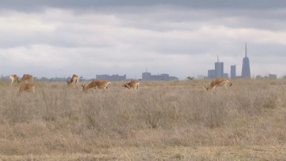 Národní park v Keni