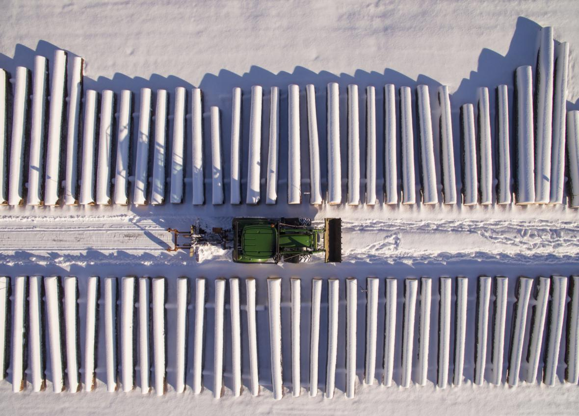 Sněhem pokryté kmeny stromů ležící u cesty v německém Chorinu.