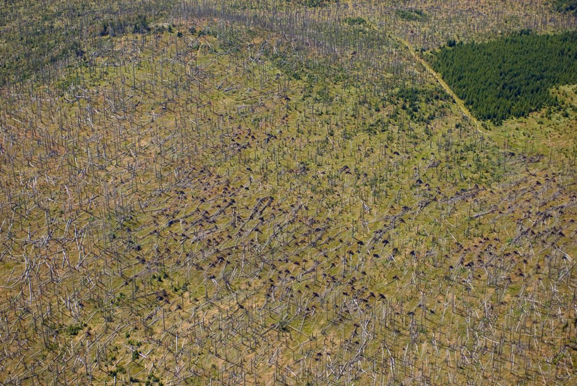 Popadané stromy po orkánu Kyrill u Černé hory v Národním parku Šumava na česko-německém pomezí