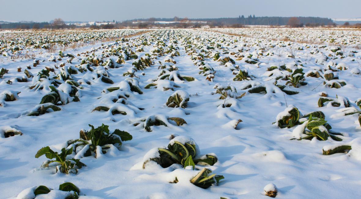 Zamrzlá půda
