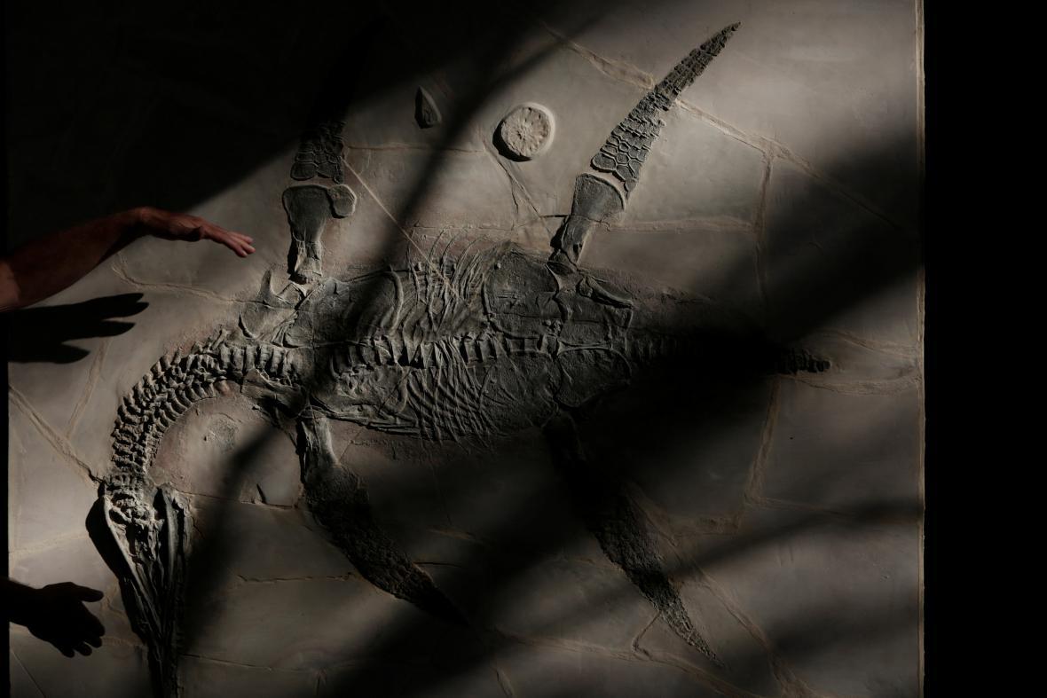Nově objevený plesiosaurus