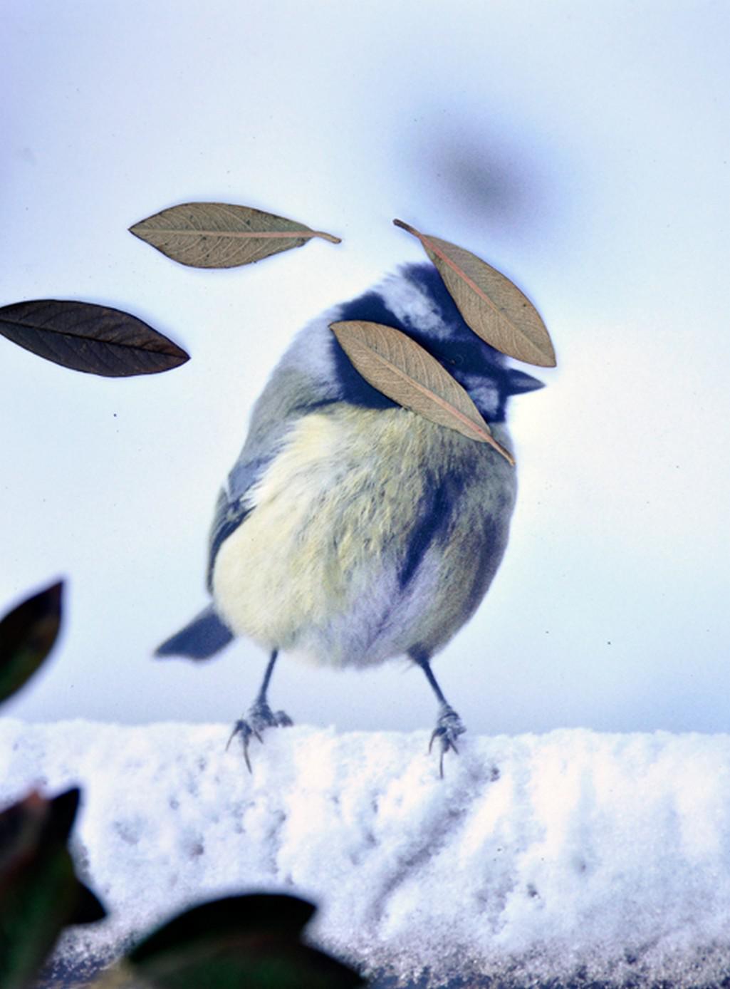Fotografie z knihy Anne Geene: Ornitologie