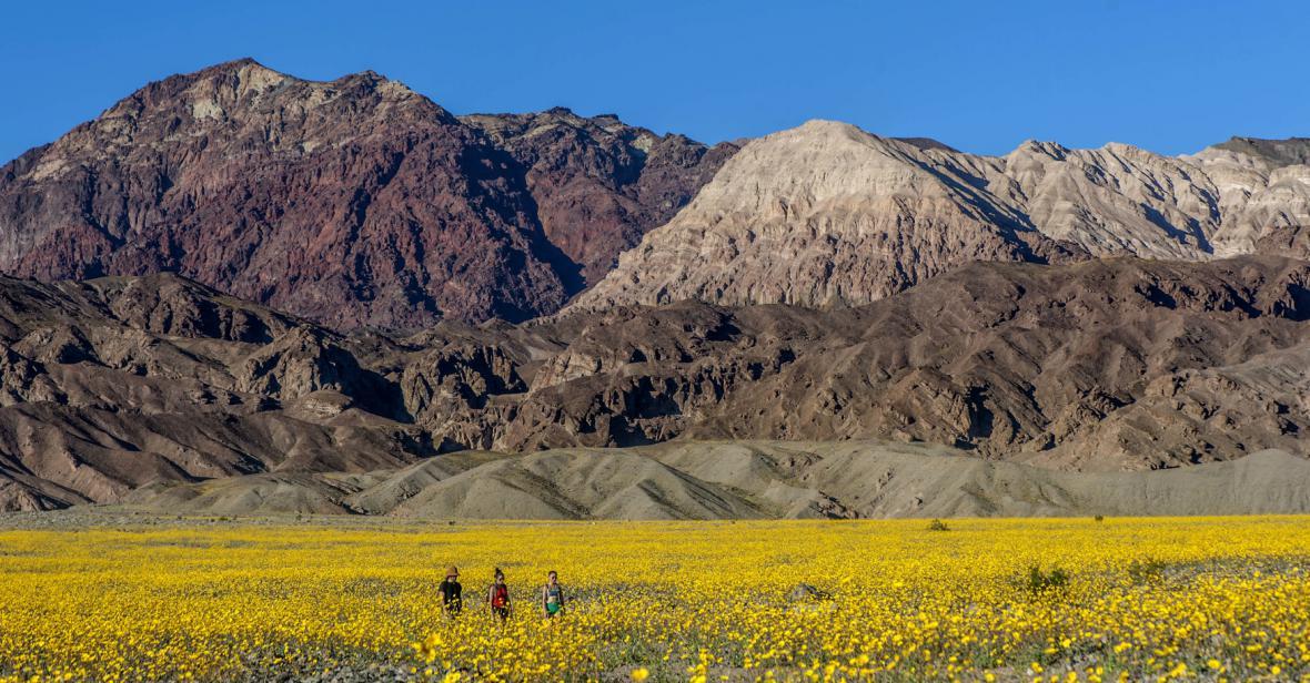 Kvetoucí Death Valley
