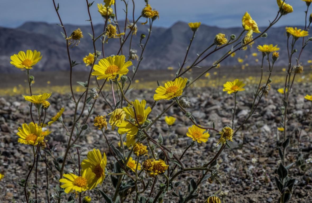 Kvetouci Death Valley