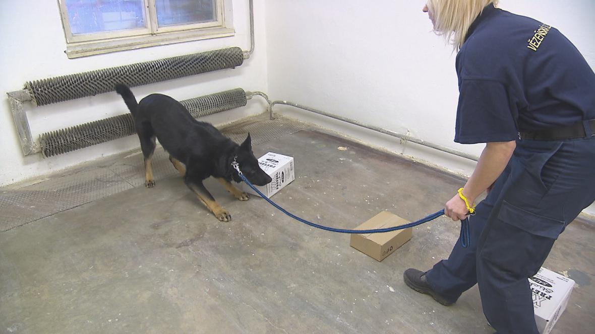 Speciálně vycvičený pes hledá drogy