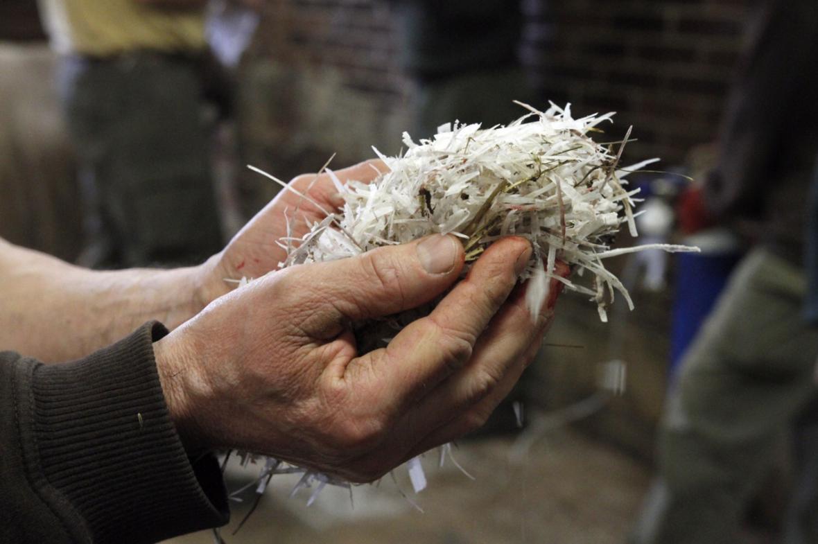 Dvorská zoo začala řezat nosorožcům rohy, na ochranu před pytláky