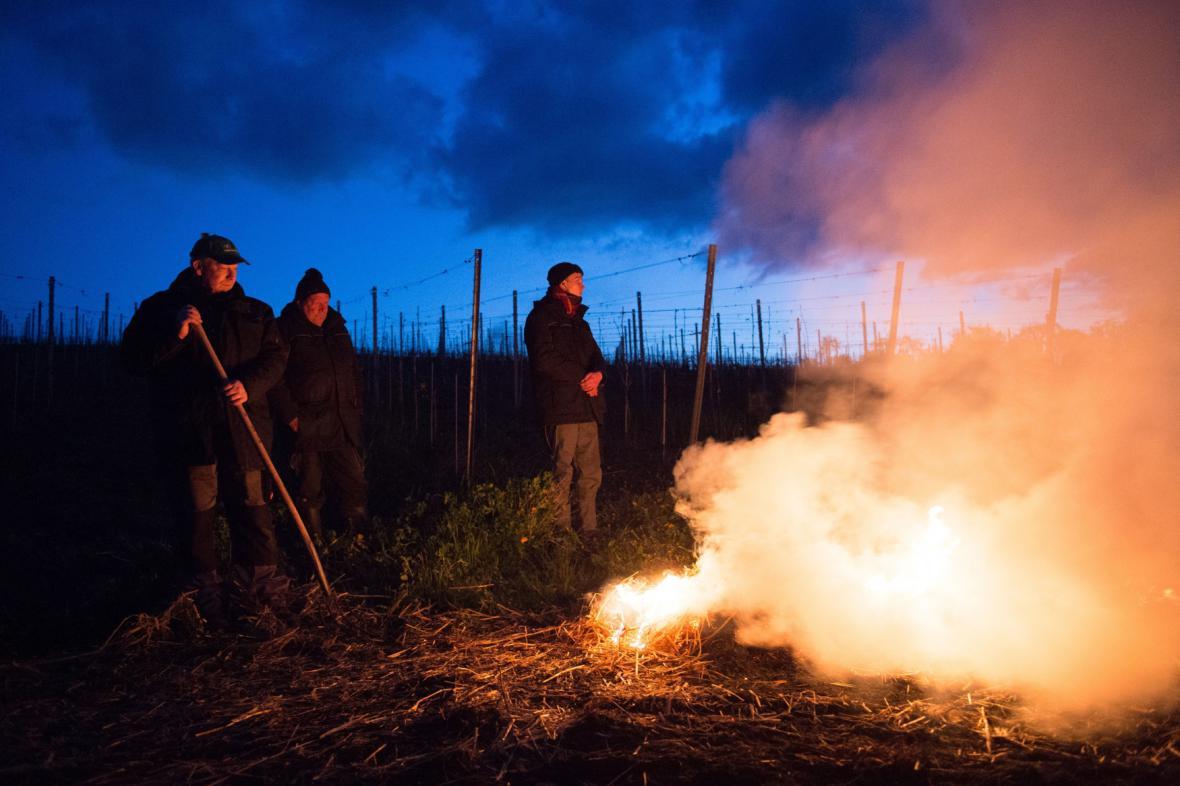 Vinaři zapalují slámu, aby ochránili vinohrad před mrazem