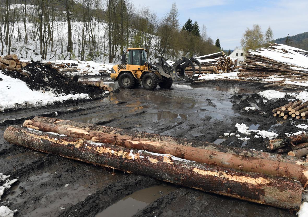 Těžba dřeva v Moravskoslezském kraji