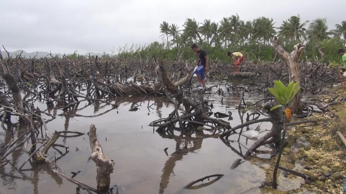 Kokosová plantáž zničená tajfunem Haiyan