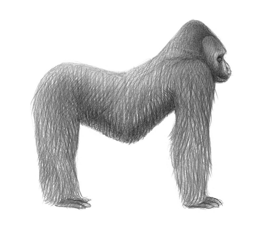 Z knihy Petr Nikl: Jino taje opic