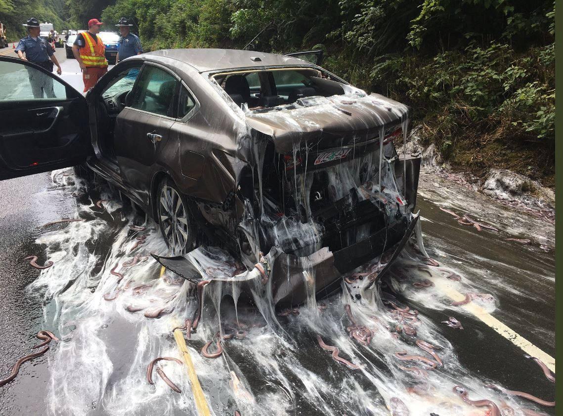 Vozidlo pokryté slizem