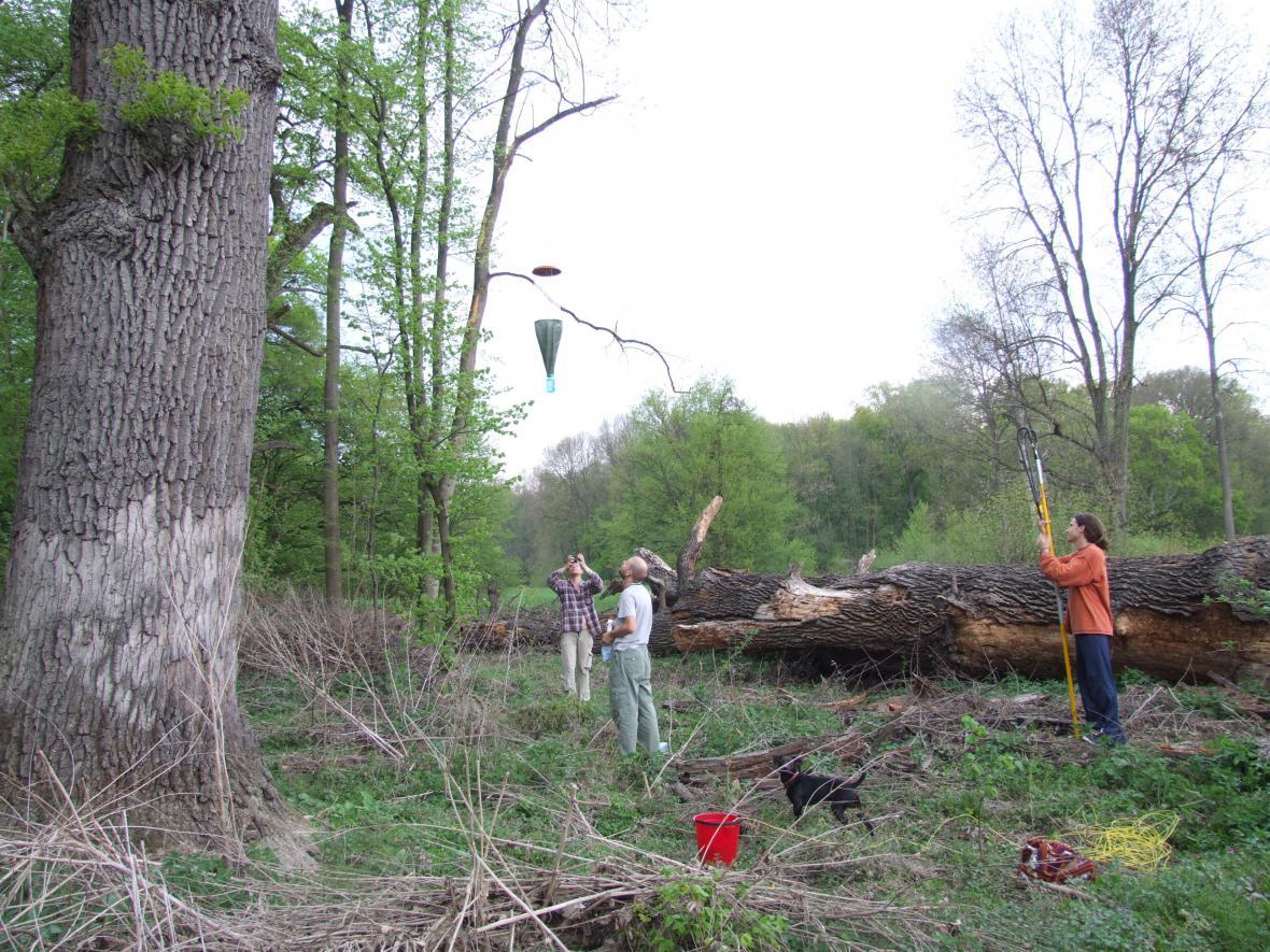 Mapování stromů