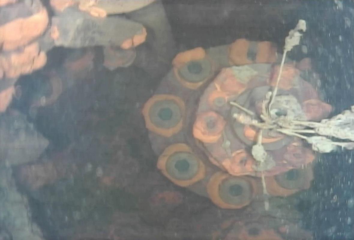 Podmořské snímky z oblasti u Fukušimy