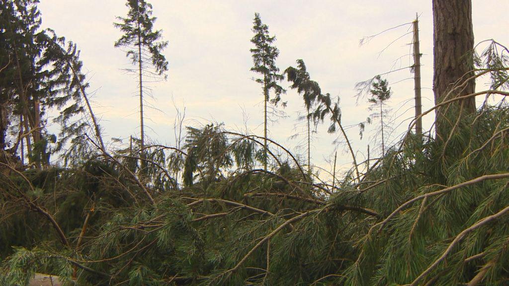 Lesy poničené větrnou smrští