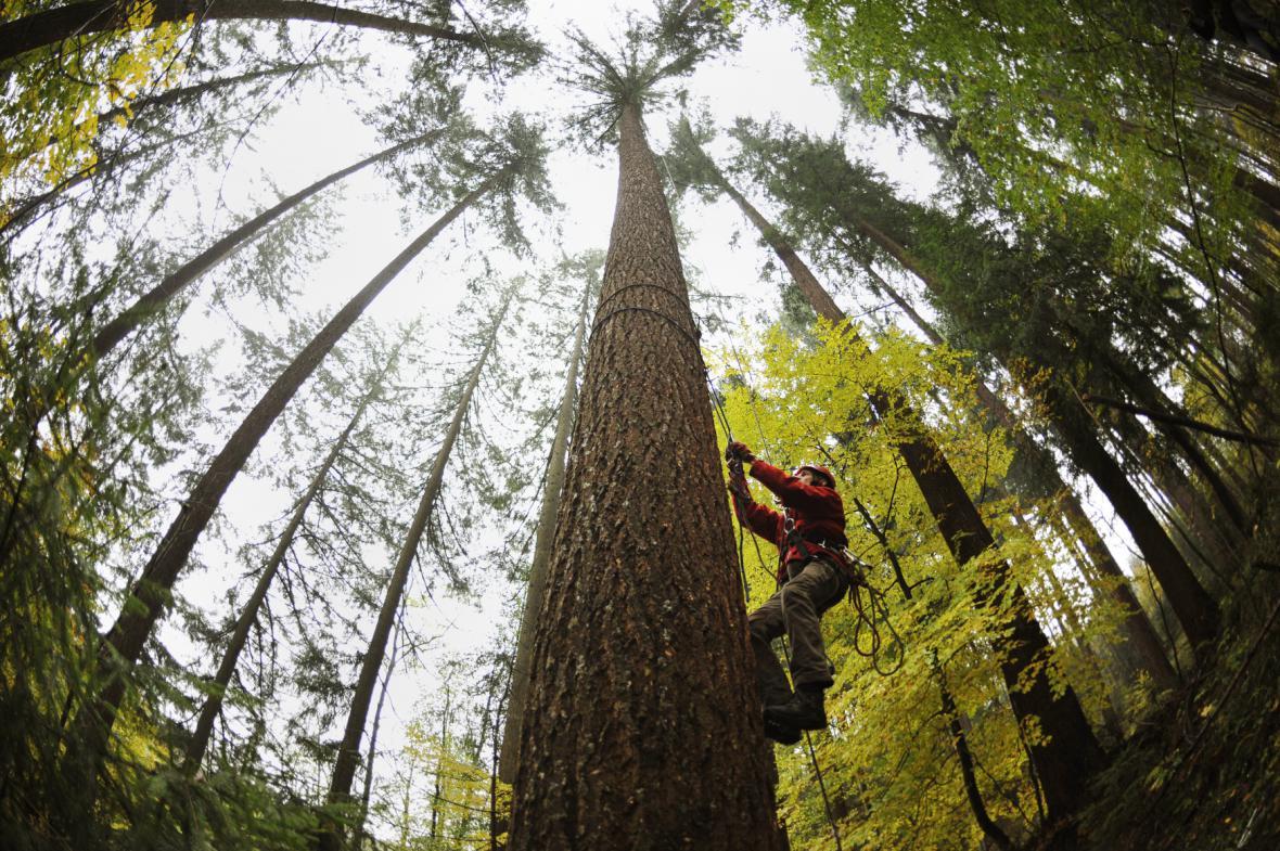 Nejvyšší strom ČR