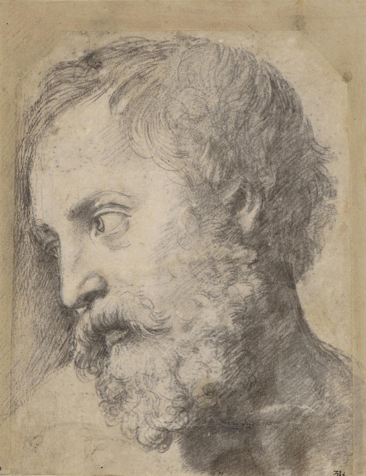Raffael / Studie hlavy apoštola, 1519-20