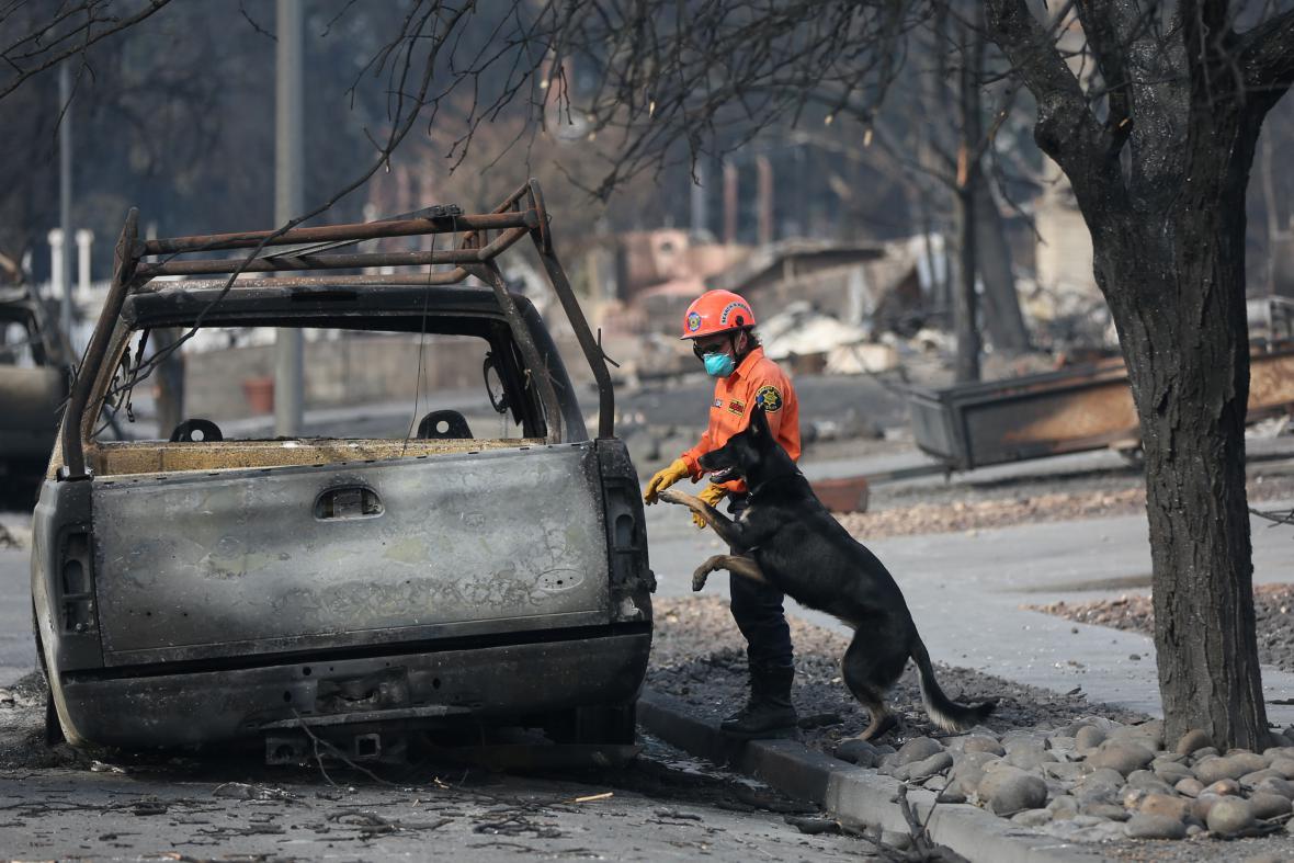Záchranář prohlíží s pátracím psem ohořelé auto v Coffey Park na okraji města Santa Rosa