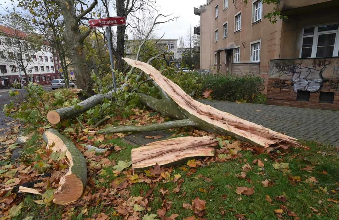 Popadané stromy a větve v Bezručově ulici v Ústí nad Labem.