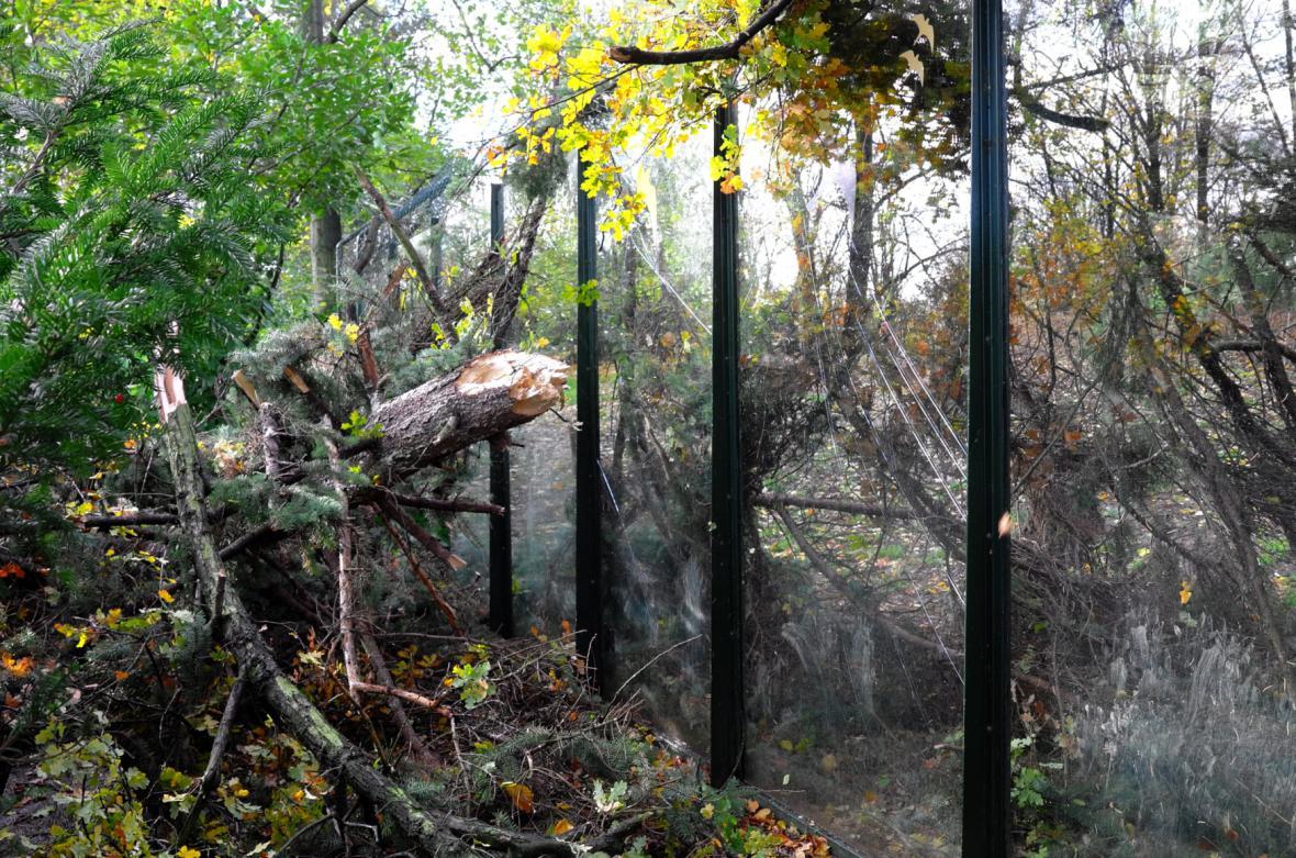 Popadané stromy v pražské zoo
