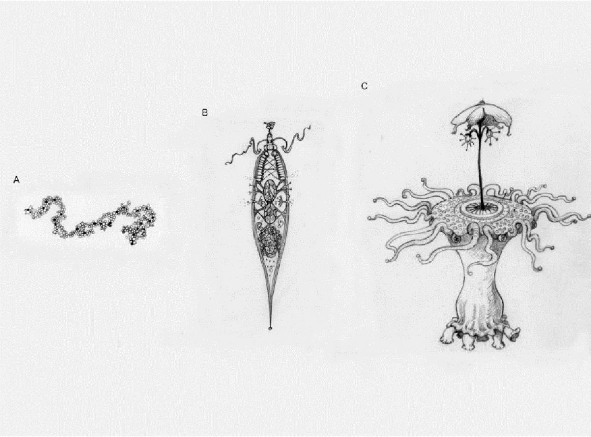 Narůstající komplexicita u teoretického mimozemského organismu