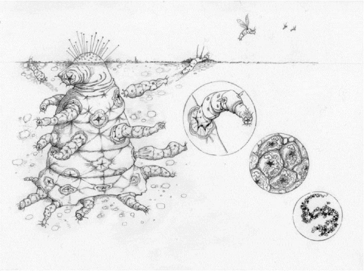 Jak by mohl vypadat mimozemský tvor podle oxfordských vědců