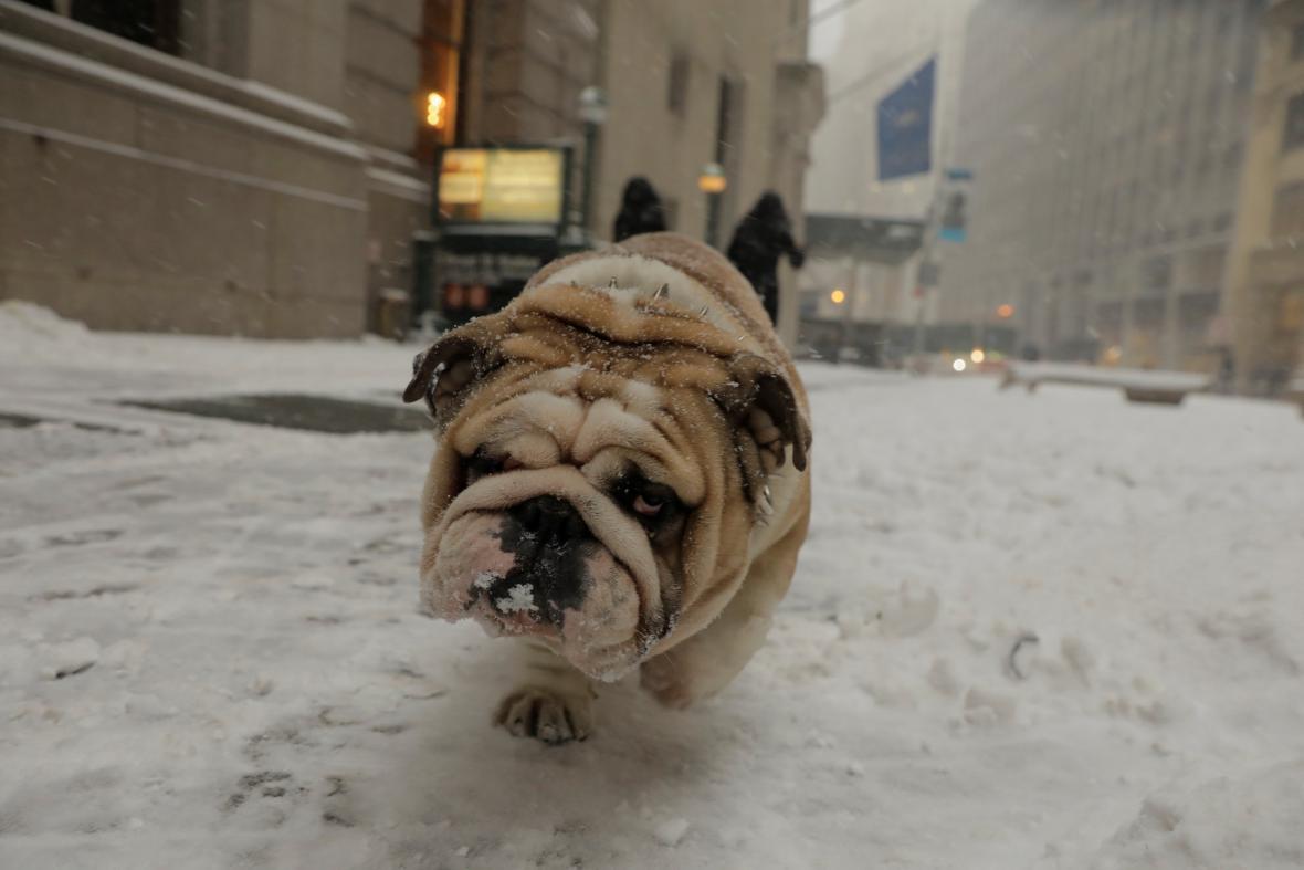 Ve sněhové bouři mají potíže i zvířata