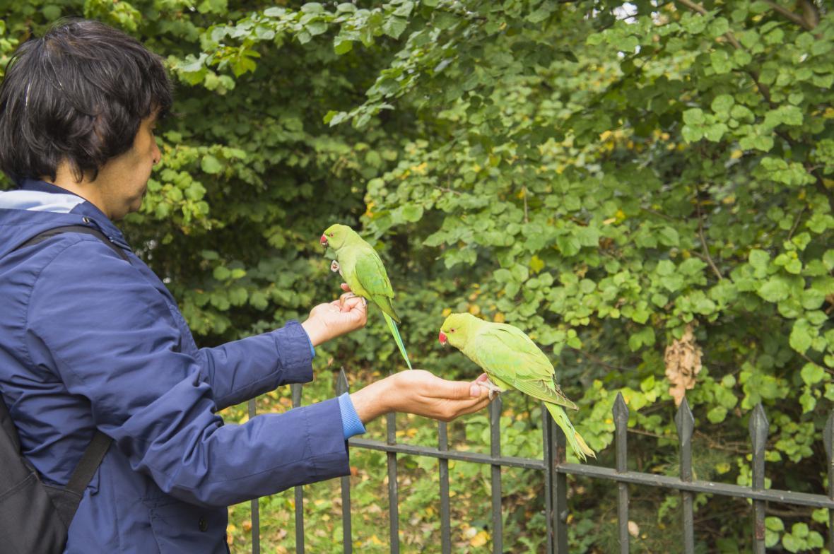 Krmení papoušků