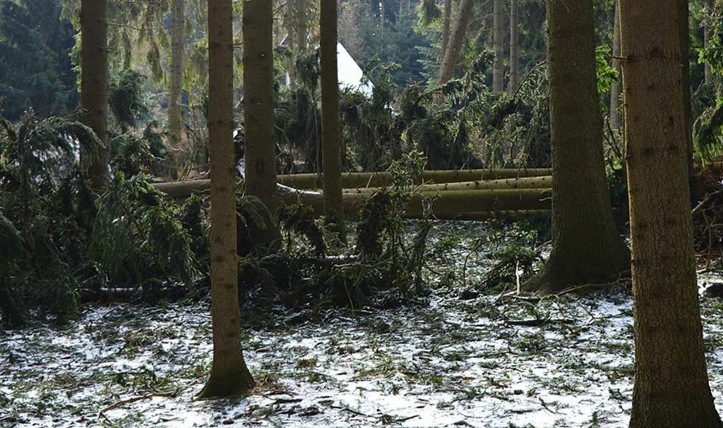 Popadané stromy