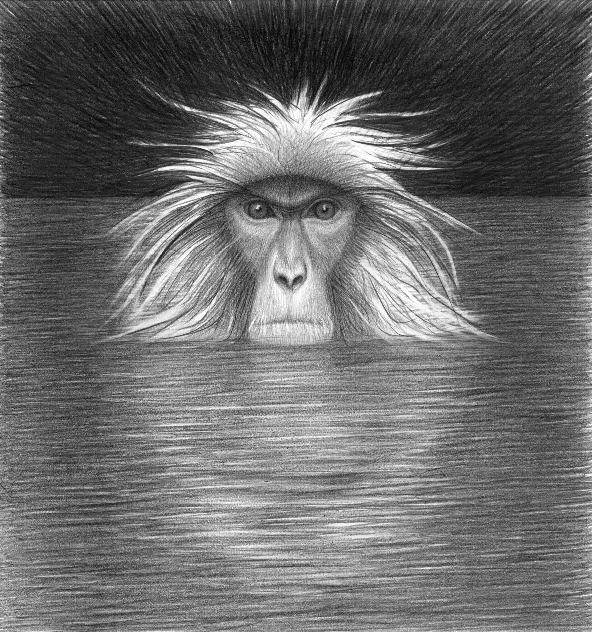 Ilustrace Petra Nikla